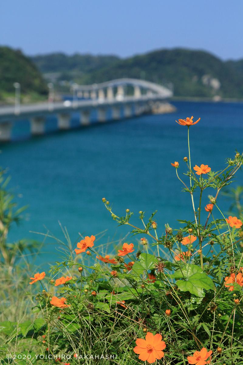 下関市角島大橋(つのしまおおはし)